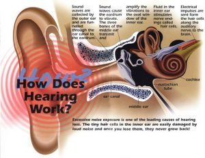 How does hearing work