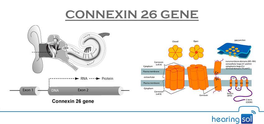 Connexin-26