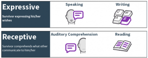 What is the difference between expressive and receptive language?