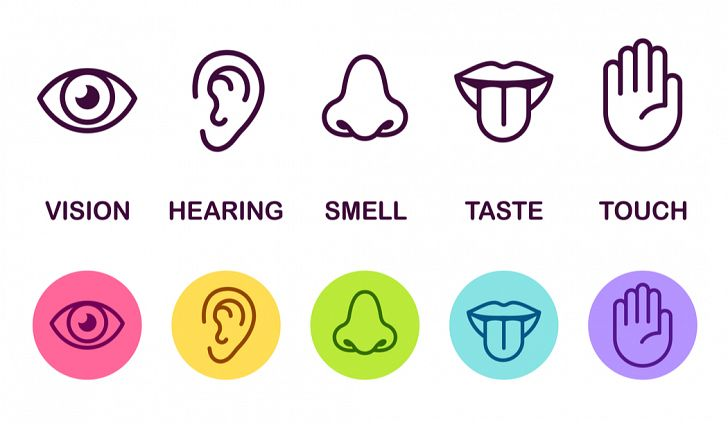 What are the five senses organs of a human body