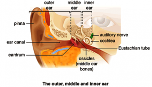 Type of Hearing Loss occurs with Damage to the Inner Ear or the Auditory Nerve