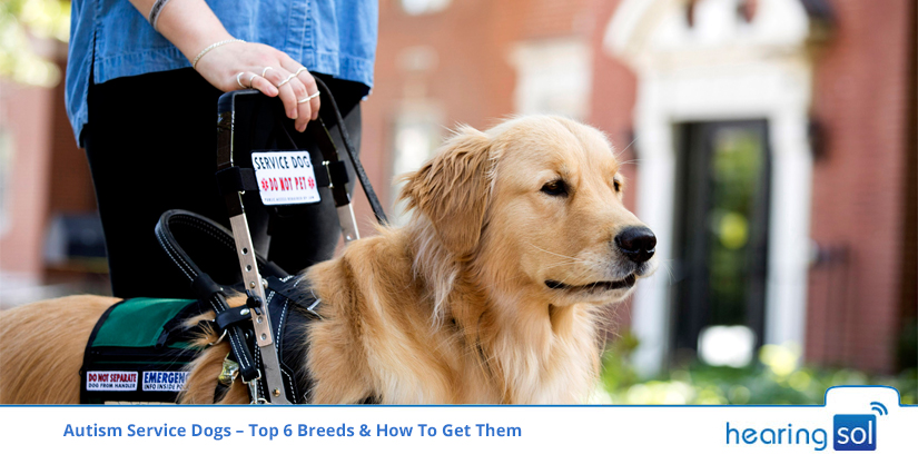 Autism Service Dogs – Top 6 Breeds & How To Get Them