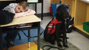 Challenges and difficulties with a Service Dog