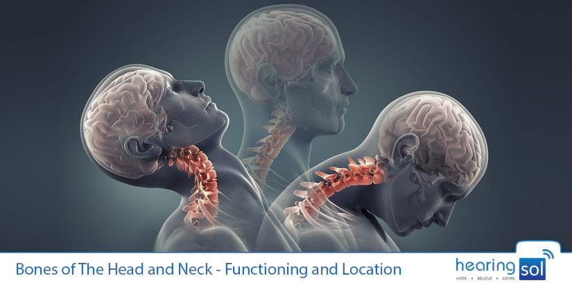 Bones of The Head and Neck - Functioning and Location
